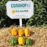 Соланор F1 10 шт насіння перцю Clause, Франція, фото 2