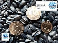 Семена подсолнечника ЛАКОМКА, кондитерский сорт 85-90 дней, Урожайность 31-35 ц/га., фото 1