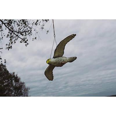 Отпугиватель птиц.Сокол в полете. CTRL-BR104