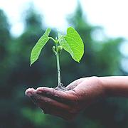 Зерно для проращивания