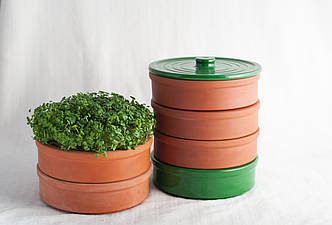 Глиняный спраутер для проращивания зерна и семян на микрозелень