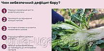 Витамин Бор 17% удобрение для внекорневой подкормки подсолнечника, рапса, сои, фото 2