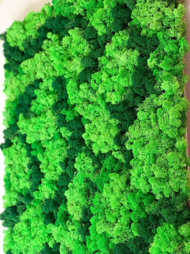 Картина з стабілізованого українського моху ягель