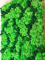 Картина з стабілізованого українського моху ягель, фото 1