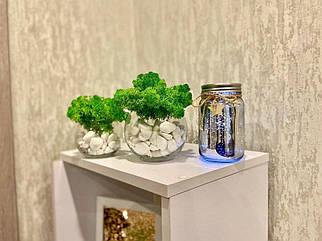 Стабилизированный мох в стеклянных горшочках 8.5х8.5 см декор для дома и офиса / оригинальный подарок