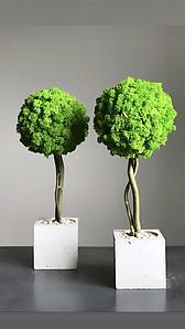 Дерево из стабилизированного мха в бетонном кашпо/декор для дома/декор из мха/Дерево в бетоне/Зелёное дерево