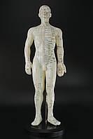 Макет человека мужчины  50см., фото 1
