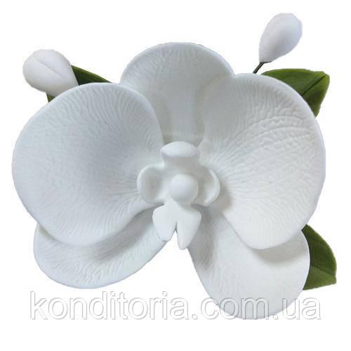 Сахарный цветок орхидея