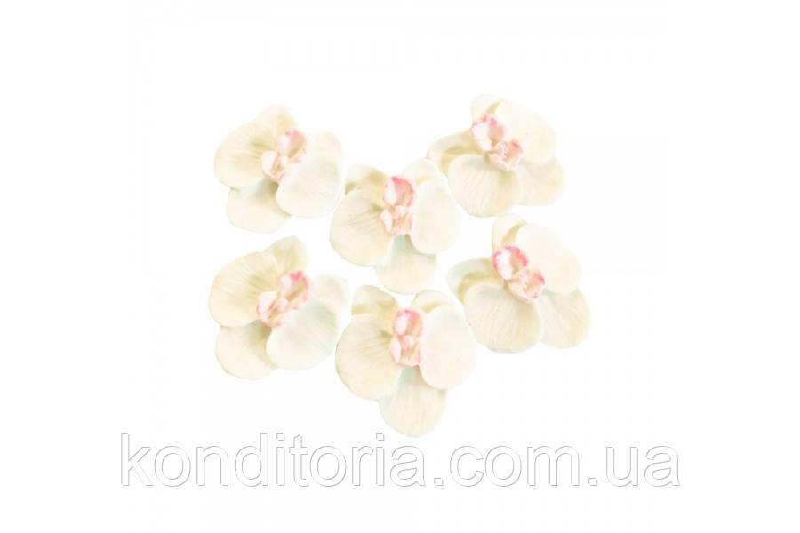 Цукрові квіти орхідеї