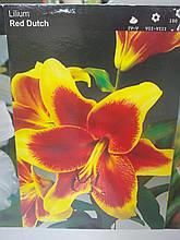 Цибулина лілії трубчастої гібрид Red Dutch червоно-жовта квітка 1 шт Junior Голландія
