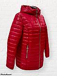 """Жіноча демісезонна коротка куртка великих розмірів """"Віка"""", фото 2"""