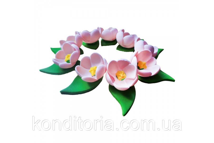 Цукрові квіти крокуси рожеві