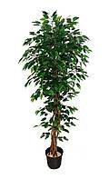 Дерево искусственное Фикус Плетеный 170см