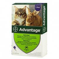 Капли Bayer Адвантейдж 80 от заражений блохами для котов и кроликов свыше 4 кг 4 пипетки