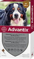 Краплі Bayer Адвантікс від заражень екто паразитами для собак понад 40-60 кг 4 піпетки (4007221048947), фото 1