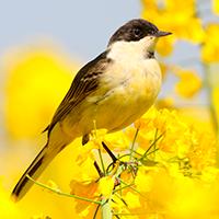 Птицы - Фартук для кухни