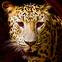 Животные - Каталог изображений для фартуков