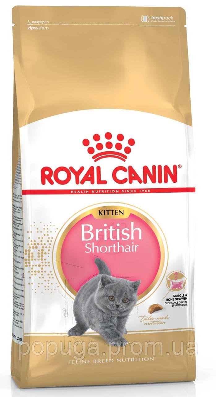 Корм Royal Canin British Shorthair Kitten для котят породы Британская короткошерстная, 2 кг