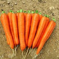 Морква Лагуна F1 Нантська (Nunhems) 0,15 г (перефасовано Vse-semena)