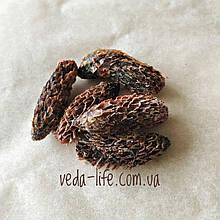 Карамелизированная шишка смереки, 10 грамм Полезная добавка к чаю