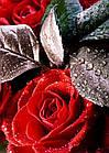 3D фотообои, цветы «Капли на розах», бумага, винил, флизелин, фото 2