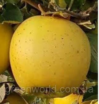Саджанці яблуні Голден Раш