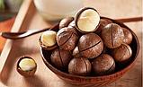 Орех Макадамия в скорлупе. Сорт высший. Дозировка 100 г, фото 3