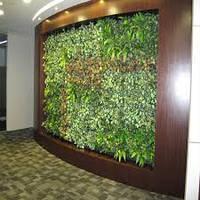 Фитостены,вертикальное озеленение