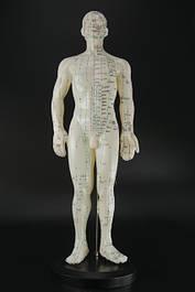 Макеты человека, частей тела