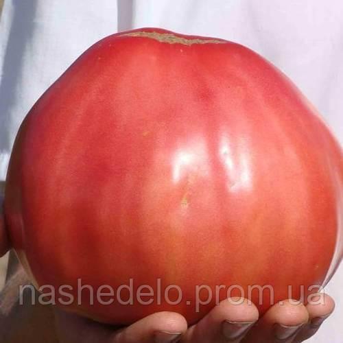 Бычий лоб томат 0,1 гр. Семена Украины