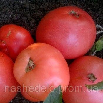 Дика роза томат 30 сем. Елітний ряд