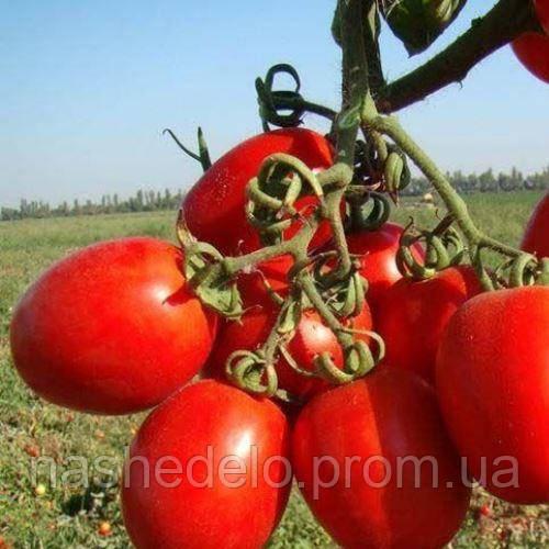 Ріо Гранде томат 3 р. Vinel
