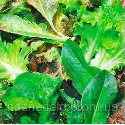 Вітамінний салат асорті - бебі 1 гр. Насіння України