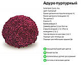Хризантема Aduro Purple(Адуро Пурпурный) Мультифлора. рассада, фото 2