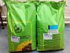 Семена кукурузы ИСБЕРИ / Isberi ФАО 190, NO-TILL , Косссад Семанс, Импорт 265гр / 1000шт, 107 ц/га.