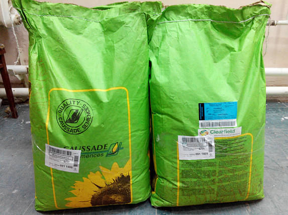 Подсолнечник под Евролайтинг Фушия КЛ Clearfield 106-115 дн., 48,7ц / га, 51% масла, Коссад Семанс, 2014 г, фото 2