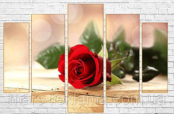 Модульная картина «Нежный бутон», красная роза