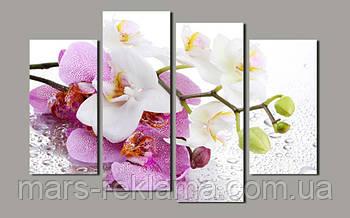Модульная картина «Белая и розовая орхидея»