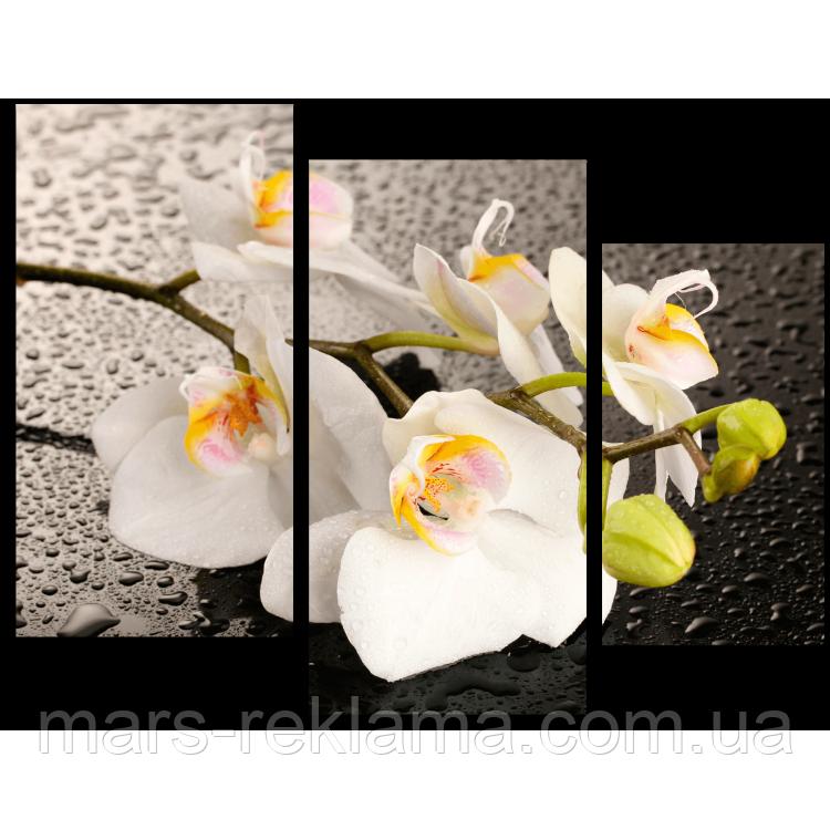 Модульна картина «Біла орхідея»