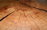 Журнальный столик круглый из натурального дерева Ясен 48*53 см. Кофейный столик для гостиной. Столик лофт, фото 7