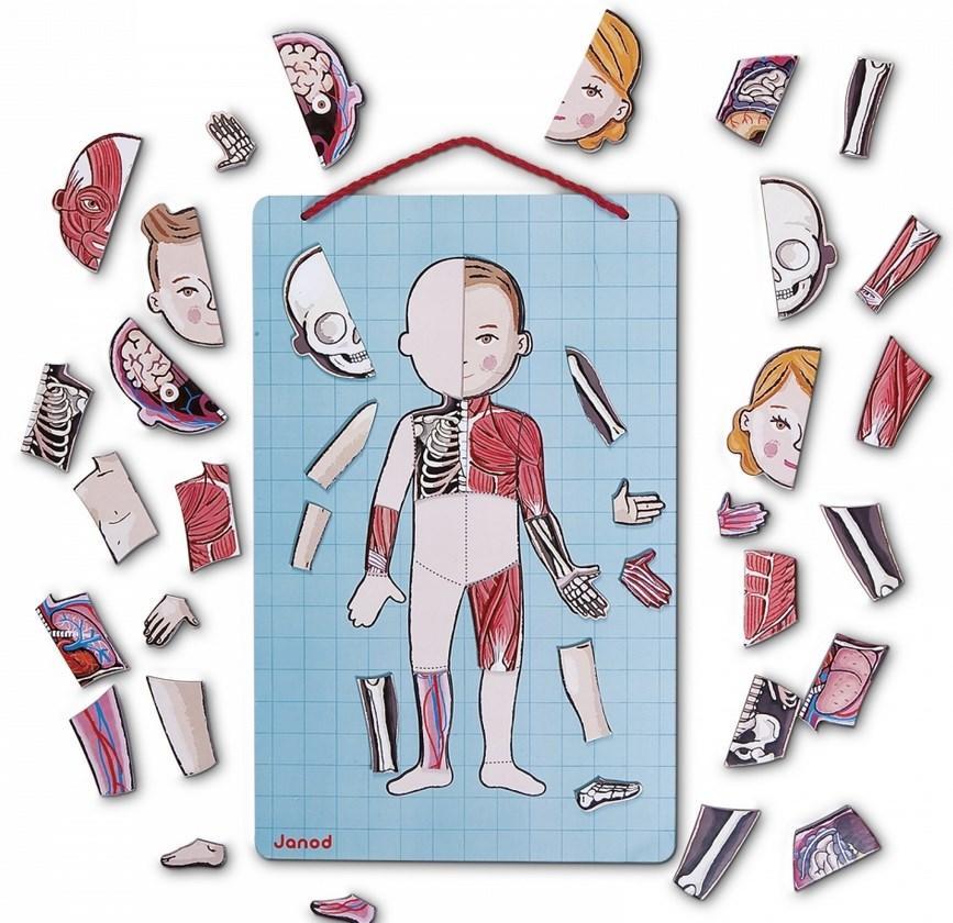 Магнітна гра тіло людини для дітей, Janod