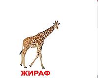 """Карточки большие русские с фактами """"Дикие животные"""" 20 шт 095061"""