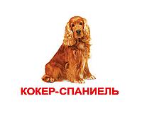 """Карточки большие русские с фактами """"Породы собак"""" 20 шт 096303"""