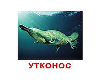 """Карточки большие русские с фактами """"Экзотические животные"""" 120 слов 096389"""