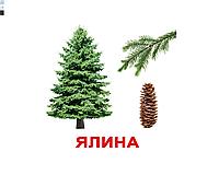 """Карточки большие украинские с фактами """"Дерева"""" 20 карт., методика Глена Домана  097034"""