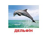 """Карточки большие украинские с фактами """"Мешканці водойм"""" 20 карт., методика Глена Домана 096518"""