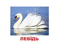 """Карточки большие украинские с фактами """"Птахи"""" 20 карт., методика Глена Домана  096532"""