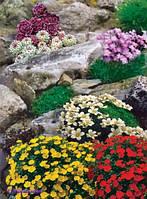 Альпийская горка(семена)