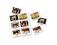 Лото. Животные. 10 игровых полей+60 карточек,  ТМ Вундеркинд с пеленок 096143