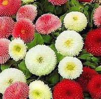 Маргаритка садовая смесь (семена)